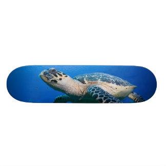 ケーマン諸島の小さいカイマン島、水中2 オリジナルスケートボード