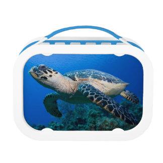 ケーマン諸島の小さいカイマン島、水中2 ランチボックス