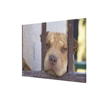 ゲートを通って、バルパライソ見ている、犬 キャンバスプリント