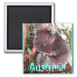 コアラのオーストラリアのおもしろいでかわいい磁石 マグネット
