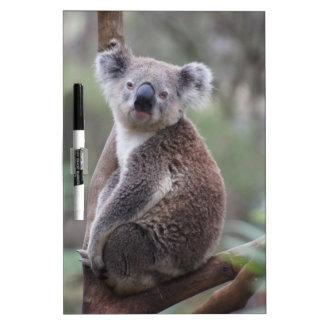 コアラのオーストラリア人の奥地に薮の木の森林上昇 ホワイトボード