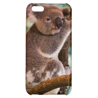 コアラの写真 iPhone5Cカバー