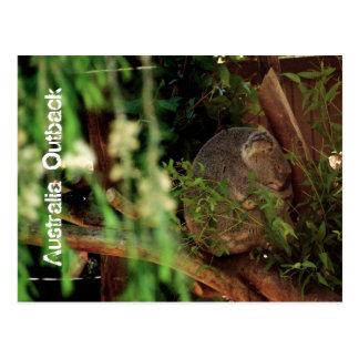 コアラの昼寝、奥地にオーストラリア ポストカード