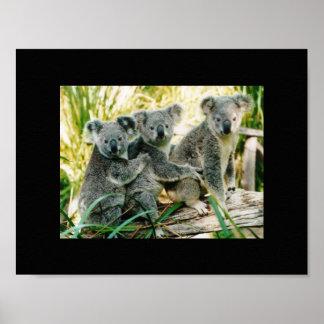 コアラの野生のプリント ポスター