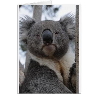 コアラ カード