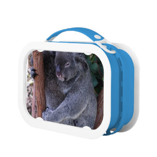 コアラ ランチボックス