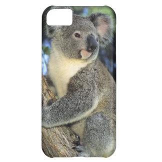 コアラ、Phascolarctosのcinereus)、オーストラリア、 iPhone5Cケース