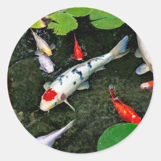 コイの池 ラウンドシール