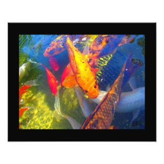 コイの魚の写真のプリント フォトプリント