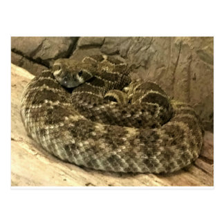 コイル状のヘビ ポストカード