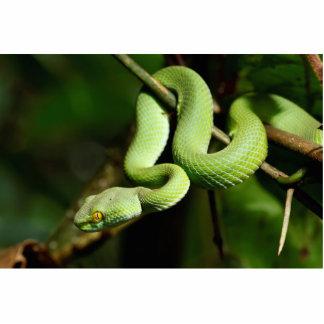 コイル状の緑の木のヘビ 写真彫刻(台付き)