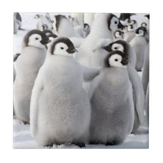 コウテイペンギンのひよこ-タイル タイル