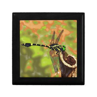 コオニヤンマ dragonfly ギフトボックス