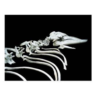 コククジラの化石 ポストカード