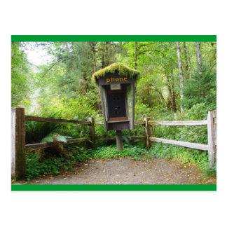 コケむした公衆電話ボックス- Hohの熱帯雨林 ポストカード