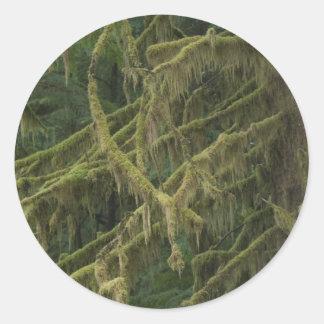 コケむした森林オレゴンのオオシカの川 ラウンドシール
