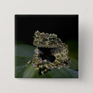 コケむしたTreefrogのThelodermaのcorticale、先住民2 5.1cm 正方形バッジ
