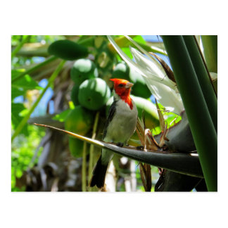 ココナッツハワイの基本的な極楽鳥 ポストカード