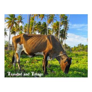 ココヤシの木の中で牧草を食べている牛 ポストカード