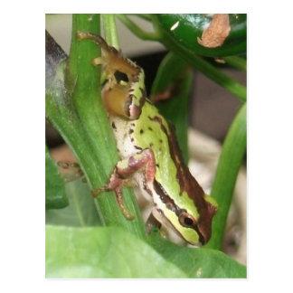 コショウの植物の斑入りのカエル ポストカード
