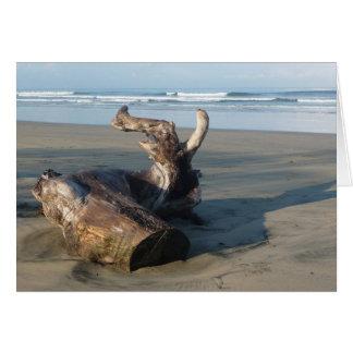 コスタリカのビーチの海岸の流木の写真カード カード