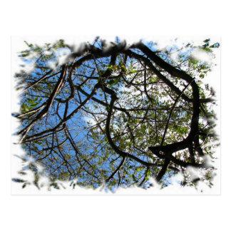コスタリカの木 ポストカード