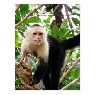 コスタリカの猿 ポストカード