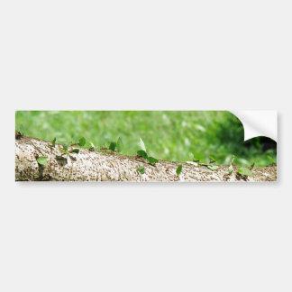 コスタリカの葉のカッターの蟻 バンパーステッカー