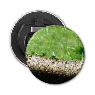 コスタリカの葉のカッターの蟻 栓抜き