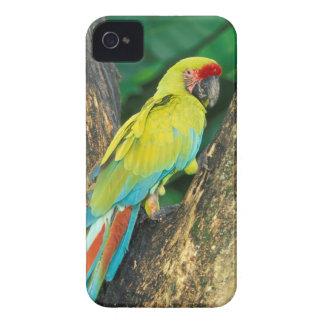 コスタリカのAra Ambiguaの素晴らしい緑のコンゴウインコ Case-Mate iPhone 4 ケース