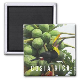 コスタリカ熱帯Toucanの記念品の磁石 マグネット