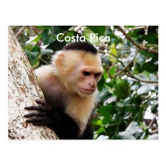 コスタリカ猿 ポストカード