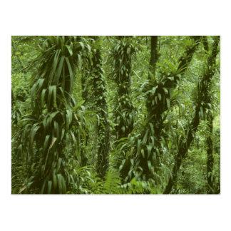 コスタリカ、Arenalの国立公園、雨林 ポストカード