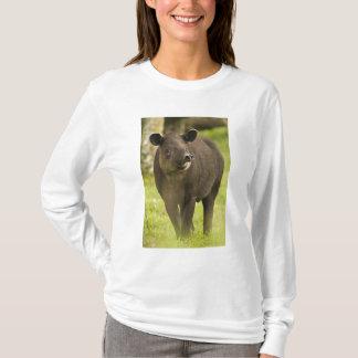 コスタリカ。 BairdisのバクのTapirusのbairdii) Tシャツ