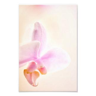 コチョウランの蘭の嬉しい夜明けの「ピンクCheer フォトプリント