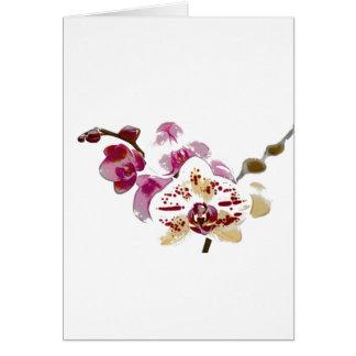 コチョウランの蘭の花の花束 グリーティングカード