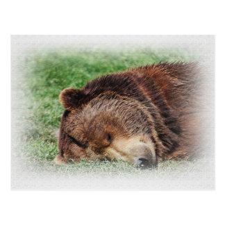 コディアックヒグマの睡眠の郵便はがき ポストカード