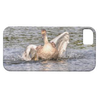 コブハクチョウの野性生物の水鳥の写真 iPhone SE/5/5s ケース