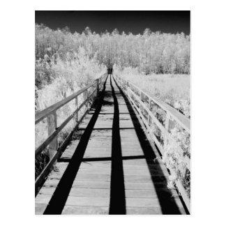 コルクせん抜きの泥地の聖域の遊歩道、フロリダ、 ポストカード