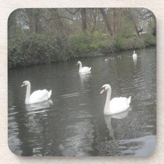 コルクのコースターの白鳥の川の水泳 コースター