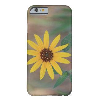 コロラド州のきらめくなヒマワリ BARELY THERE iPhone 6 ケース