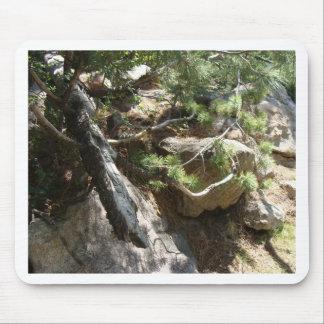 コロラド州のマツ枝 マウスパッド