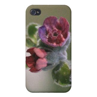 コロラド州の小さいあずき色の野生の花4/4s iPhone 4/4Sケース