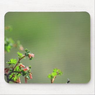 コロラド州の木の芽 マウスパッド