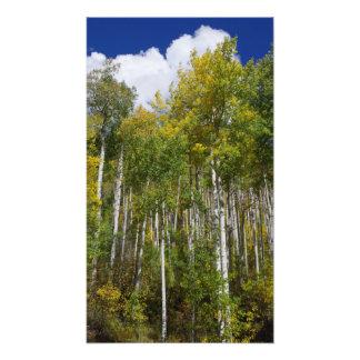 コロラド州の秋Aspens.JPG フォトプリント