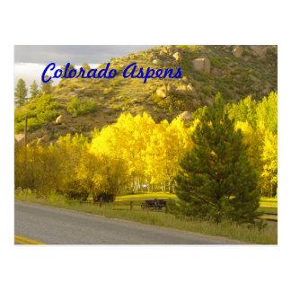 コロラド州の《植物》アスペンの郵便はがき ポストカード