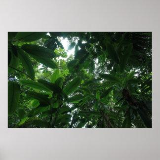 コロンビアの雨林 ポスター
