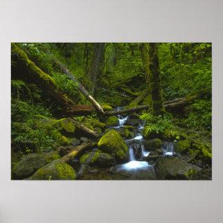 コロンビア川の穏健な雨林の流れ ポスター