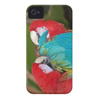 コンゴウインコのオウムのプリントのiphoneカバー Case-Mate iPhone 4 ケース