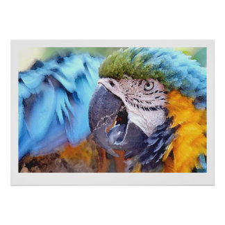 コンゴウインコのオウムの鳥の野性生物動物 ポスター
